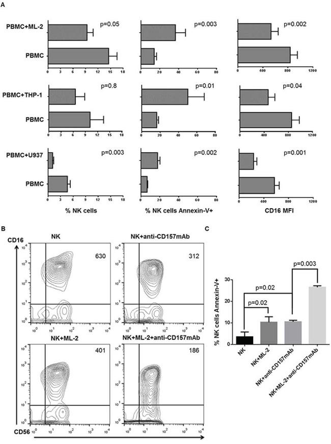 Human AML cell-induced NKCAs involves CD16 antigen.
