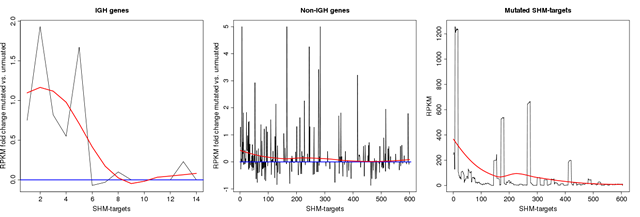 Transcription rate in SHM genes.