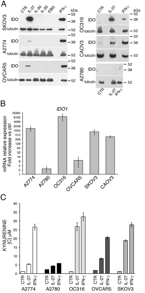 IL-27 induces IDO protein and mRNA expression in human EOC cells
