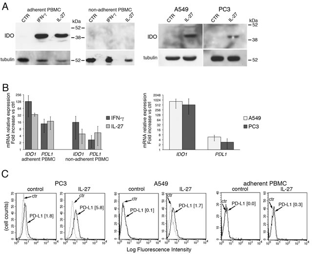 IL-27 induces PD-L1 and/or IDO expression in human PC3 prostate and A549 lung cancer cells and adherent PBMC.