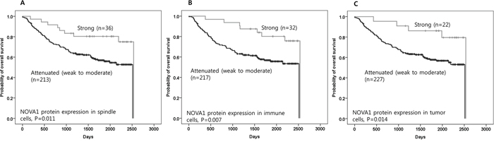 Figure 5. The prognostic meaning of attenuated NOVA1 expression in gastric cancer tissues.