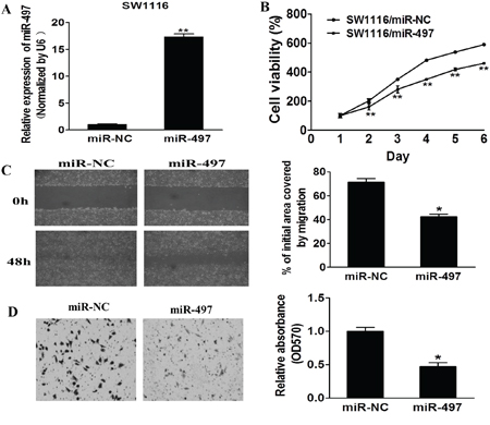 MiR-497 inhibits cell proliferation, migration and invasion.