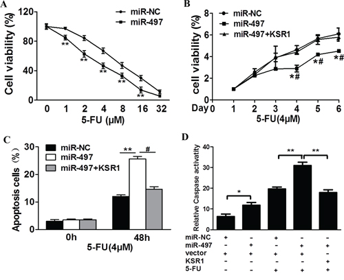 MiR-497 regulates 5-fluorouracil chemosensitivity by targeting KSR1 in colorectal cancer cells.