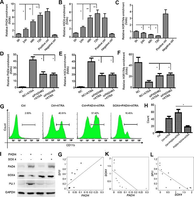 PAD4 regulates SOX4 expression through citrullination and functions in a SOX4-dependent manner.