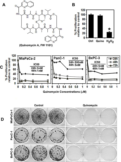 Quinomycin inhibits pancreatic cancer cell proliferation.