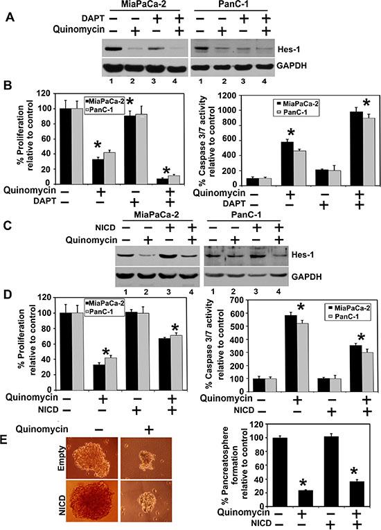 Quinomycin inhibits cell growth through inactivation of the γ-secretase complex.