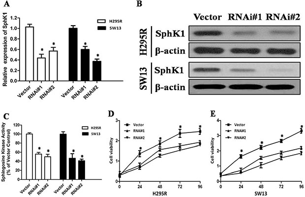 Depletion of SphK1 abrogates the proliferation of ACC cells.