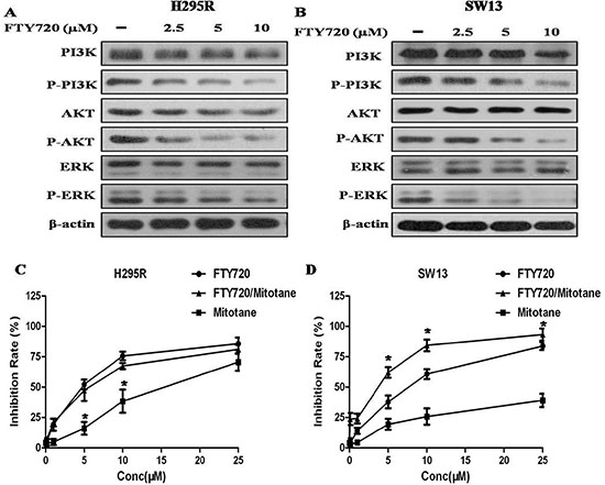 Effect of FTY720 on the activities of major signaling pathways, and effect of FTY720/mitotane combination on the proliferation of ACC cells.