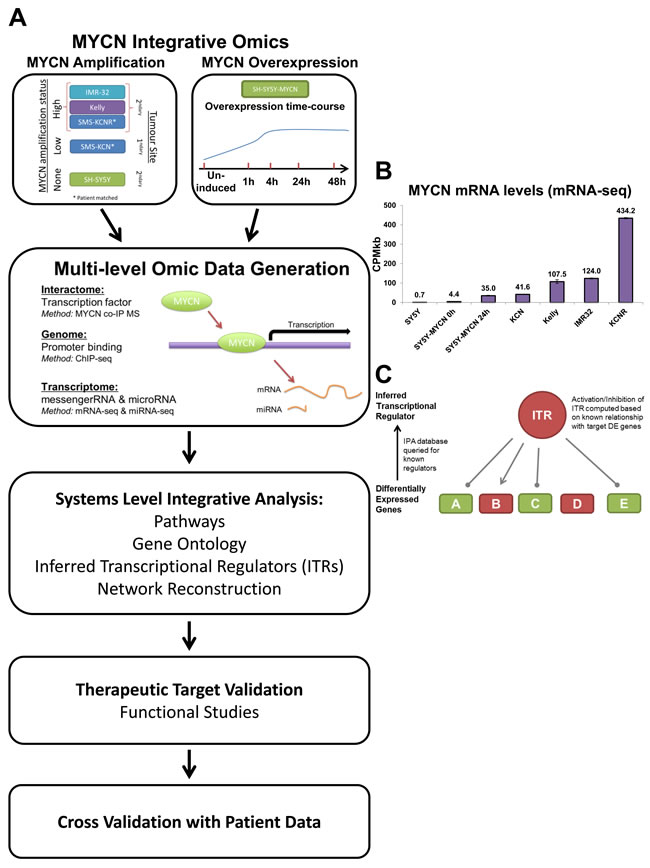 An integrative omics approach for analysing MYCN networks.
