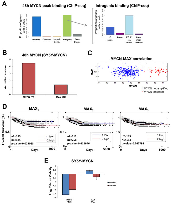Global MYCN DNA binding profile and MYCN-MAX divergent functions.