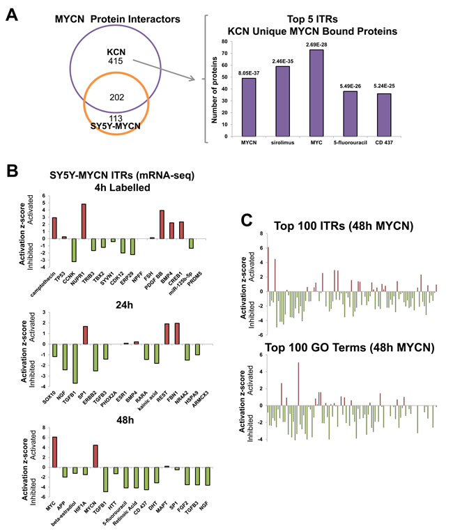 MYCN protein-protein interactors, and global repression of cellular networks by overexpressed MYCN.