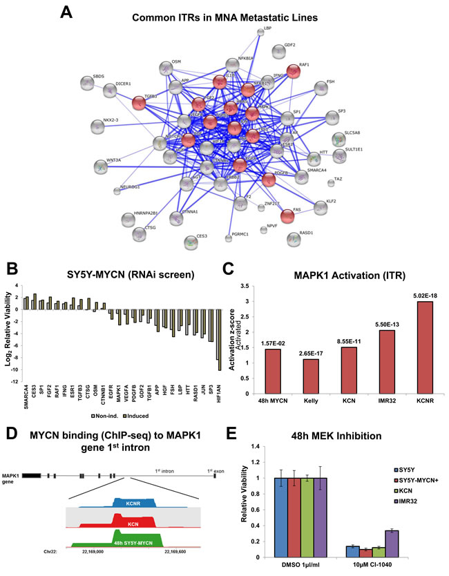 Identification of therapeutically targetable nodes through ITR and network analysis: MAPK.