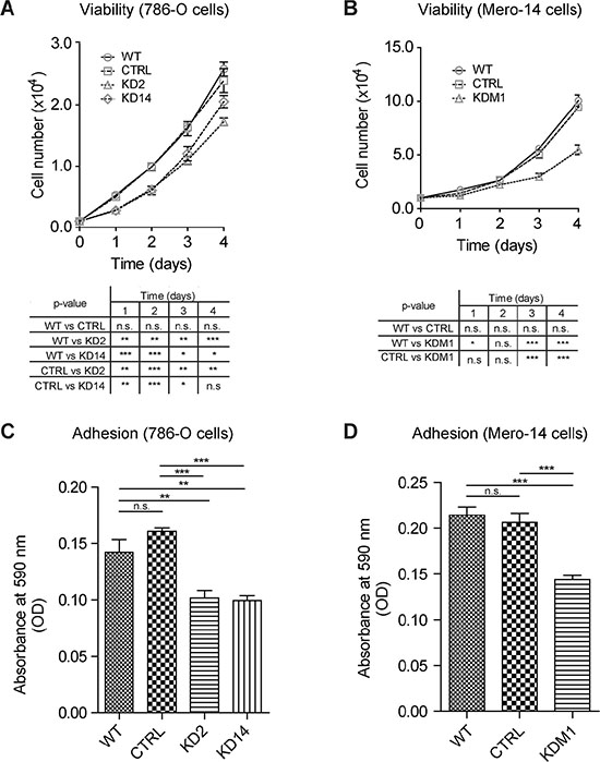 Depleting MICAL2 reduces cancer cells viability and adhesion in vitro.