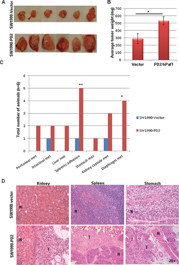 PD2 overexpression promotes tumor growth and metastasis in vivo.