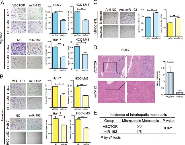 miR-192 suppressed HCC cell metastasis in vitro and in vivo.