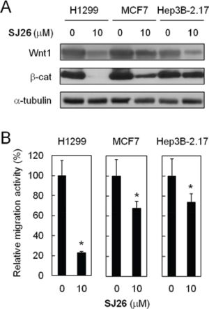 SJ26 suppressed cell migration in H1299, MCF7 and Hep3B 2.17 cells.