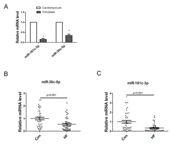 Expression of cardiomyocytes-derived miRNAs.