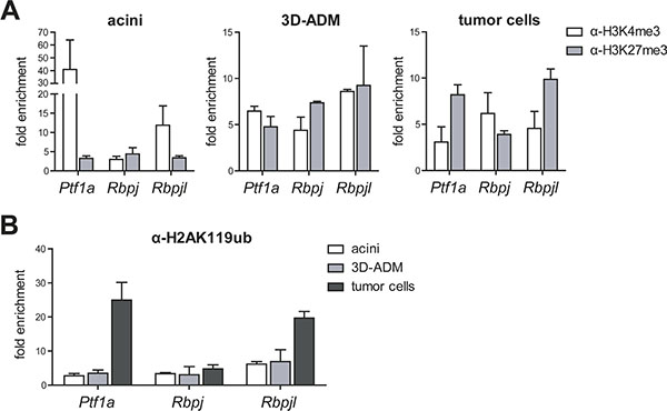 Histone modifications were changed in metaplastic acini and pancreatic tumor cells.