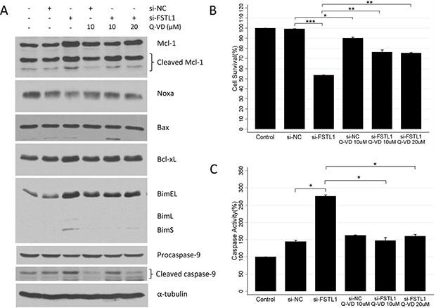 FSTL1 inhibition induced caspase-dependent apoptosis.
