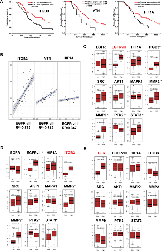 Significance of EGFRvIII, integrin β3, HIF-1α, VTN, and their relations in malignant glioma samples.