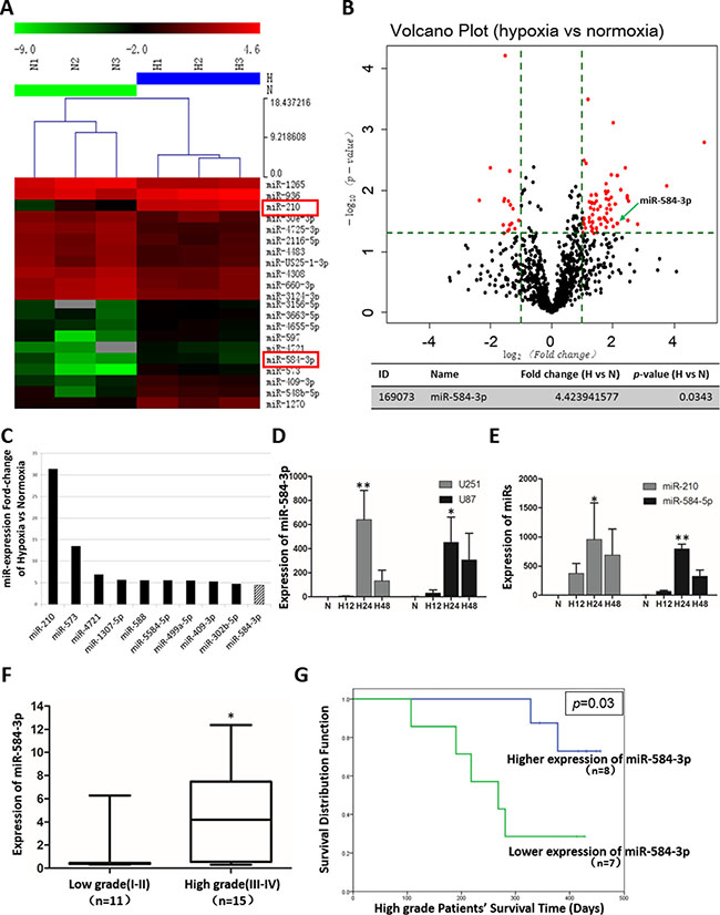 miRNA array analysis of differentially expressed miRNAs in hypoxic glioma cell lines and miR-584-3p expression levels in human glioma tumors and cell lines.