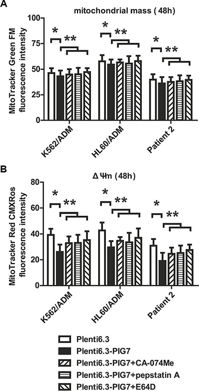 Effect of pig7 on the changes in mitochondrial mass and membrane potential (ΔΨm).
