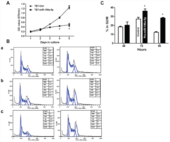 Overexpression of miR-199a-5p reduces proliferation and induces G2/M arrest in TE7 cells.