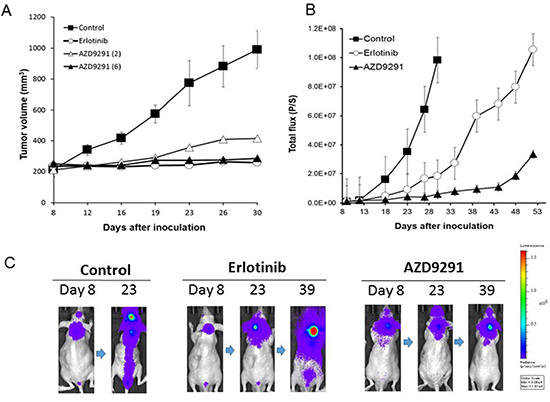 Effect of EGFR-TKI treatment in subcutaneous and LMC models with PC-9/ffluc cells.