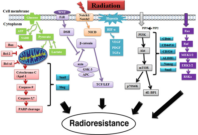 The roles of different signaling pathways associated with CSCs in radioresistance.