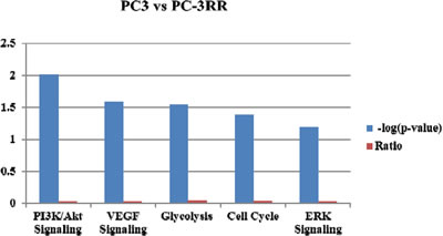 The top five potential pathways associated with prostate cancer radioresistance identified by label-free LC-MS/MS approach.