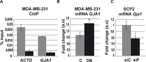 Runx1 downregulates GJA1 gene expression in the absence of Foxp3.