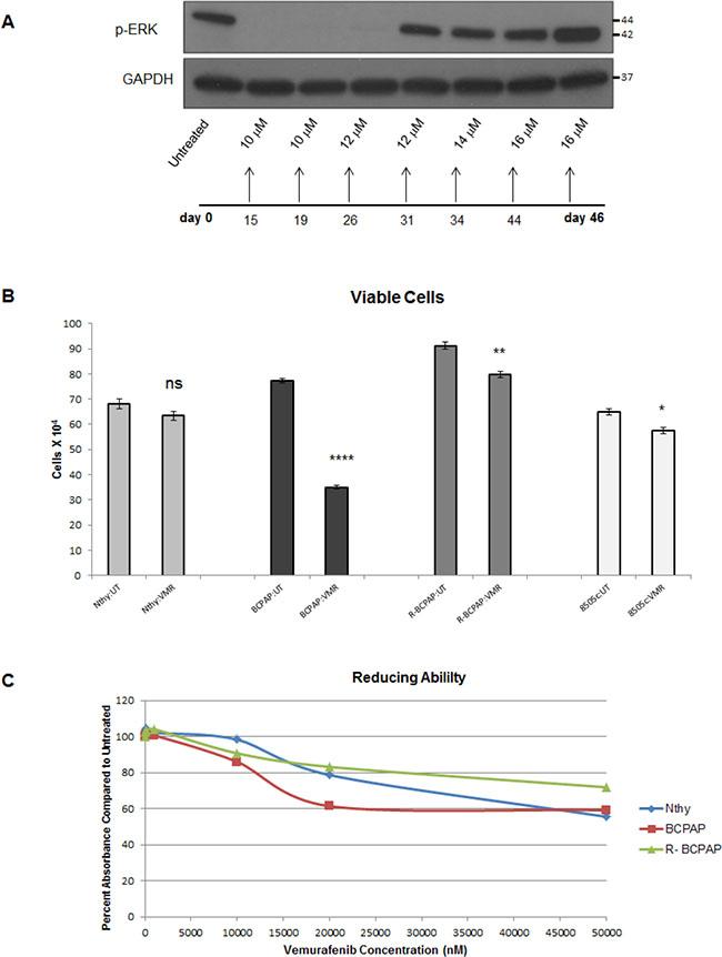 In vitro resistance to vemurafenib develops in BCPAP cells.