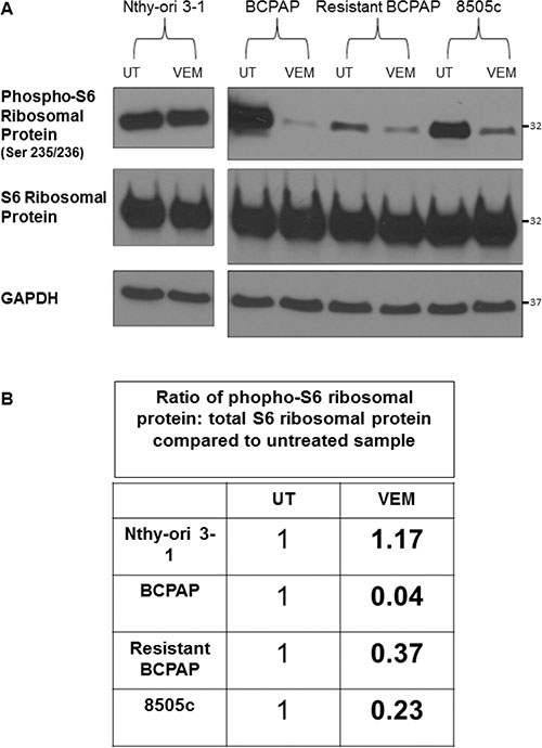 Resistant BCPAP cells are less sensitive to vemurafenib-mediated inhibition of phospho-S6 ribosomal protein compared to BCPAP.
