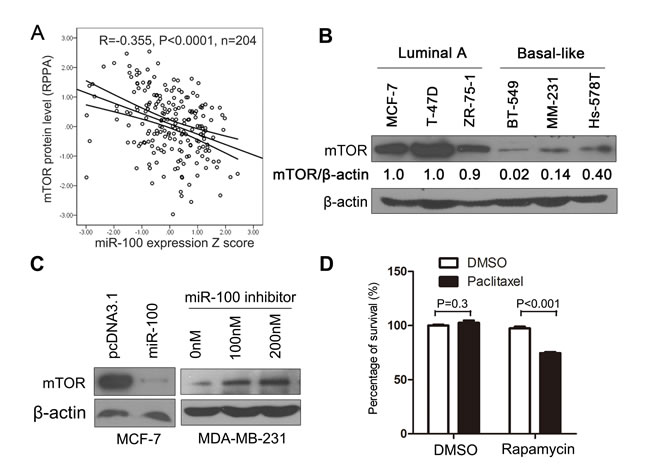 mTOR plays a role in miR-100-mediated sensitization to paclitaxel treatment.