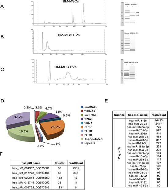 Bioanalyzer profile and small RNA sequencing of BM-MSC derived EVs.