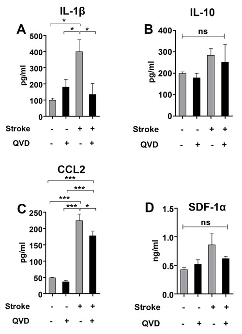 Cytokine analysis 2 weeks after stroke.