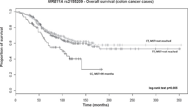 Kaplan-Meier OS curves for MRE11A rs2155209 in colon cancer patients.