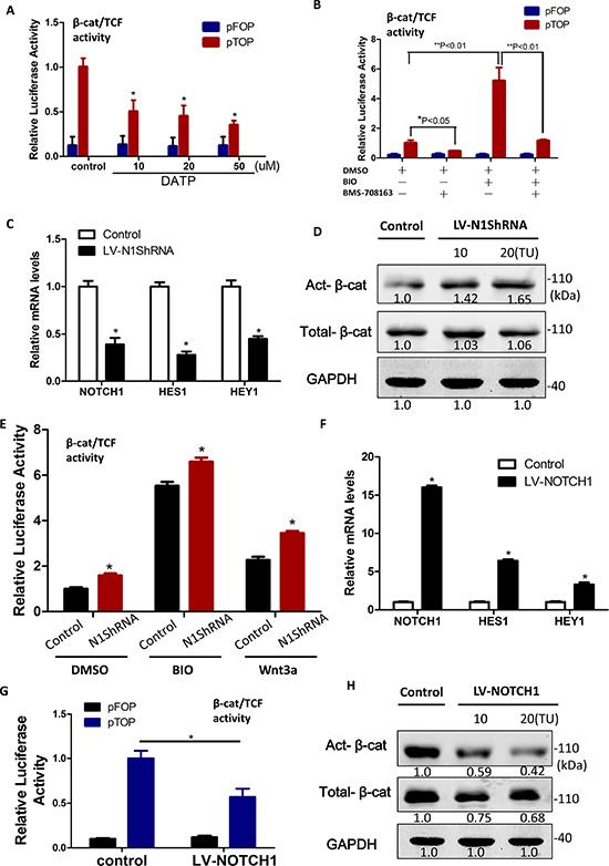 β-catenin protein levels were diminished by Notch1 in liver cancer stem cells.