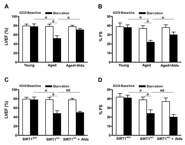 ALDH2 activation improves cardiac function during starvation in aged hearts.