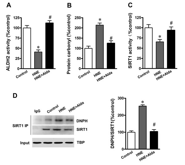 ALDH2 activation reduces SIRT1 carbonylation and improved SIRT1 activity under aldehydic overload.
