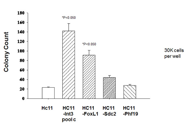 Anchorage independent-growth of HC11 cells stably expressing