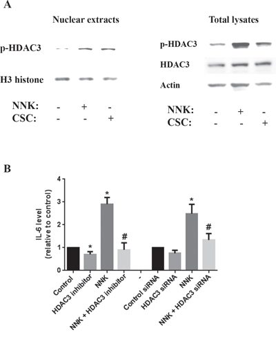 Smoking stimulates IL-6 production through a mechanism that involves HDAC3 translocation to the nucleus.