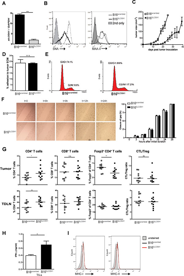 Reduced sialic acid levels on B16 melanoma decline Treg frequencies and increase effector T cell numbers and tumor control.