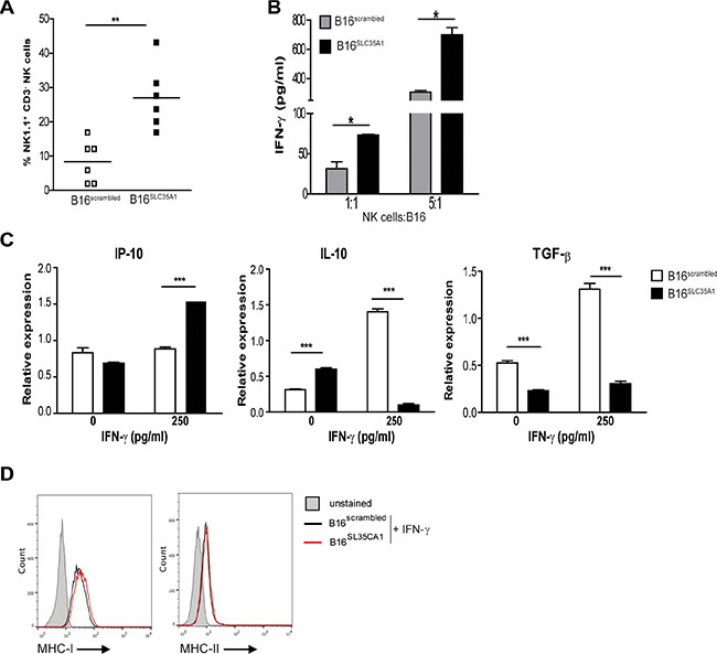 Increased numbers of intra-tumoral NK cells ignite an immunogenic milieu in B16SLC35A1 tumors via IFN-γ.