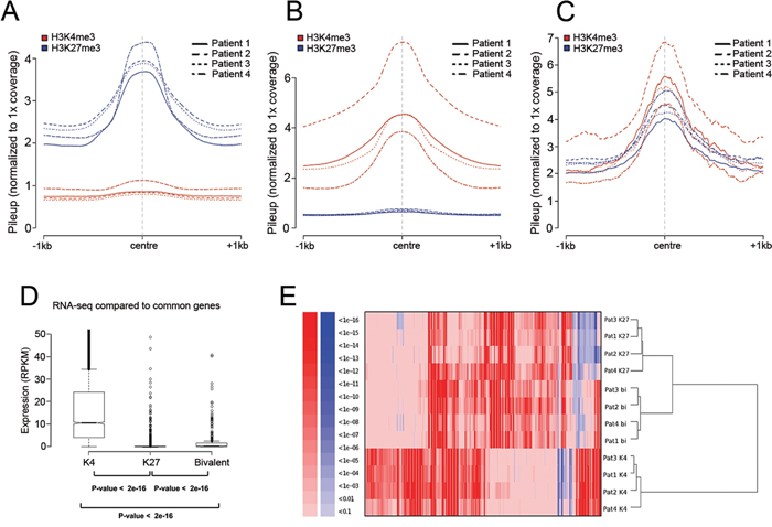 The chromatin profile and transcriptional activity of MM.
