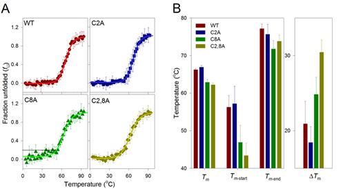 Thermal denaturation studies of hVDAC3.