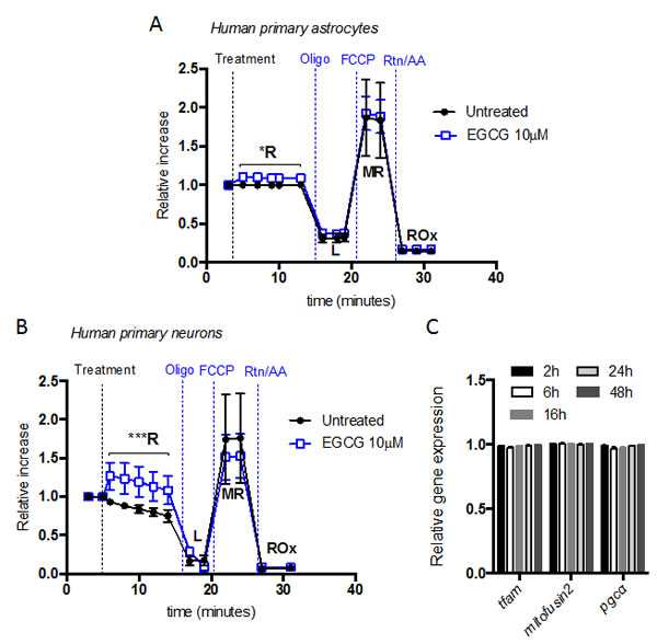EGCG increases neuron and astrocytes routine respiration without altering mitochondrial biogenesis.