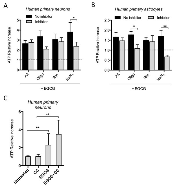 EGCG-dependent ATP increase is inhibited when complex IV is blocked in neurons and astrocytes.