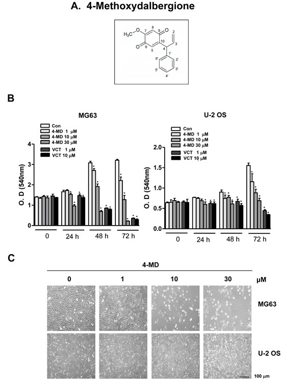 Effects of 4-MD on cell growth in osteosarcoma cells.