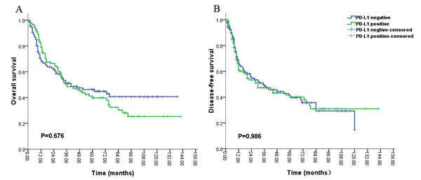 Kaplan-Meier survival analysis of PD-L1 expression and the prognosis including overall survival (A) and disease-free survival (B) for all the patients with gliomas.